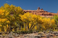 Fall colors in Courthouse Wash