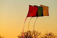 kites on evening sky