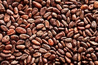 cocoa beans background