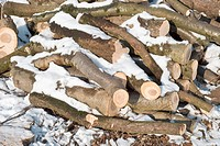 Cut Winter Lumber for Heating