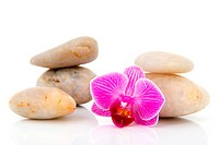 Pink Orchid and white pebbles