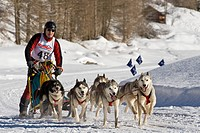 Switzerland, Splugen, Sleddog race