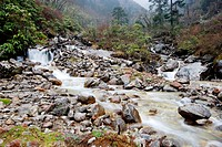 Stream ; Yumthang Valley ; Yumthang ; North Sikkim ; India