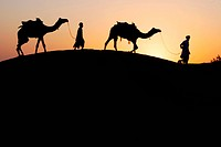 Camels with men walking on sand dune after sunset , Khuri , Jaisalmer , Rajasthan , India