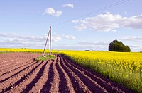 spring landscape with tillage and rapes field