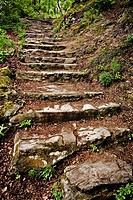 stone stairs in a wood