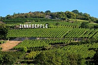 Alsace Grand Cru vineyard Zinnkoepfle between the villages Westhalten and Soultzmatt, Alsace, France