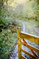Open gate on a woodland track, Wales