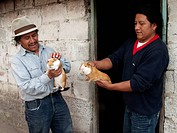 Man buying Guinea Pig, Otavalo, province Imbabura, Ecuador