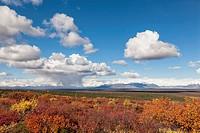 USA, Alaska, Landscape along Denali Highway in autumn with Alaska Range