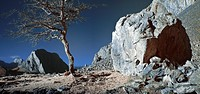 Colorful tree and rock under a blue sky, infrared photograph.