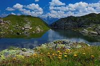 Austria, Europe, Tyrol, uplands, Serfaus, mountain lake, Ess, water, Furglersee, mountain pastures, flowers, stones, mountains, Samnaun group, oetztal...