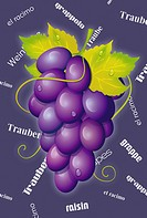 Illustration glossy grapes with typo