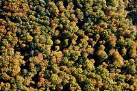 Autumnal mixed forest, aerial photo