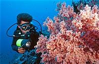 Female scuba diver and soft coral  Papua New Guinea  South Pacific