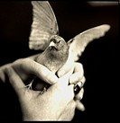 Finch on womans hand