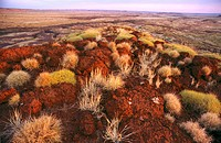 Breakaway country northern Great Sandy Desert in the,Western Australia