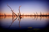 Lake Nuga Nuga sunrise over trees naturally drowned by the lake, Nuga Nuga National Park, Central Queensland, Australia