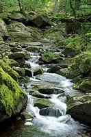 Gebirgsbach Ilse im Nationalpark Hochharz, in Sachsen_Anhalt / Deutschland, im Herbst, Mountain stream Ilse in the Harz National Park, in Saxony_Anhal...