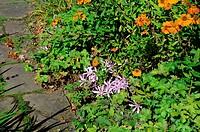blühende Pflanzen im Staudenbeet