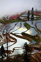 China, Yunnan, Yuanyang, Shengcun, rice terraces,
