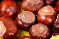 Chestnuts on autumn leaves as a background