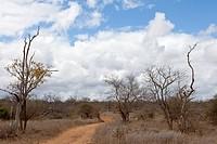 Landschaft Südafrikas