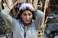 Frau trägt schweres Holz, Mount Everest Trek, Nepal, Südasien Woman carrying heavy wood, Mount Everest trek, Nepal, South Asia