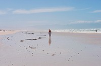 A man walks on the beach, reflected in the wet mud on an out going low tide. Muizenberg beach. Cape Town, South Africa