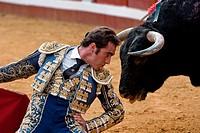 The Spanish bullfighter El Fandi between the horns of the bull, Spain