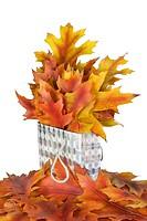 Golden oak leaves in a gift