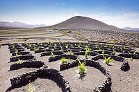 Lanzerote - Plantation of vines in volcanic ground in La Geria, Lanzarote Island, Canary Islands, Spain