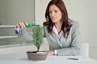 Mature businesswoman pruning bonsai tree