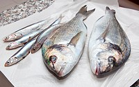 WR1033577 Anchovies and sea bream for sale