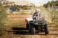 Older Caucasian man and grandson on four wheeler in olive grove