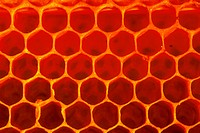 DEU, 2001: Honey bee (Apis mellifica), honeycomb.