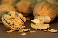 DEU, 2009: English Walnut, Persian Walnut (Juglans regia), Whole and opened nuts, studio picture.