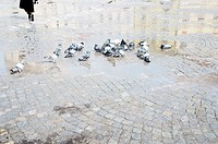 Masaryk Square, pigeons in Jihlava, Czech Republic, March 29, 2013. (CTK Photo/Libor Sojka)