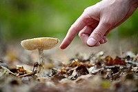 A hand pointing at a wild mushroom