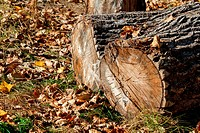 block of wood and autumn foliage