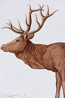 Germany, Bavaria, Wall painting of male deer