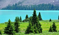Spruce trees and Bow Lake at the Bow Summit, Banff National Park, Alberta, Canada