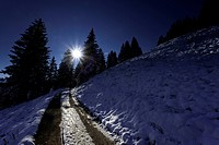 mountain slope and coniferous forest in backlight, Switzerland, Kanton Schwyz, Ibach