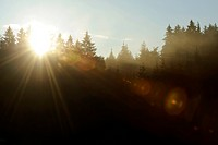morning sun over coniferous forest, Germany, Bavaria
