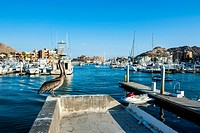 The harbour of Los Cabos, Baja California, Mexico, North America
