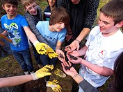 smooth newt (Triturus vulgaris, Lissotriton vulgaris ), children with a lot of newts in the hands, Germany