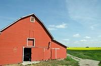 Red barn in a canola field, Alberta, Canada