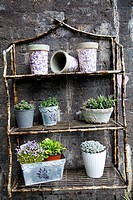 Plants on Rustic Shelving Display at Borough Market in London UK.