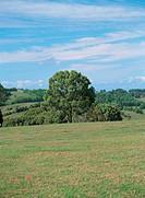 scenery of field