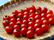 wet cherry tomato in basket